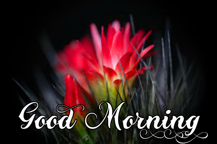 nature flower Good Morning images hd