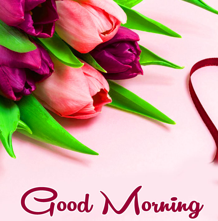 pink purples flower Good Morning images hd