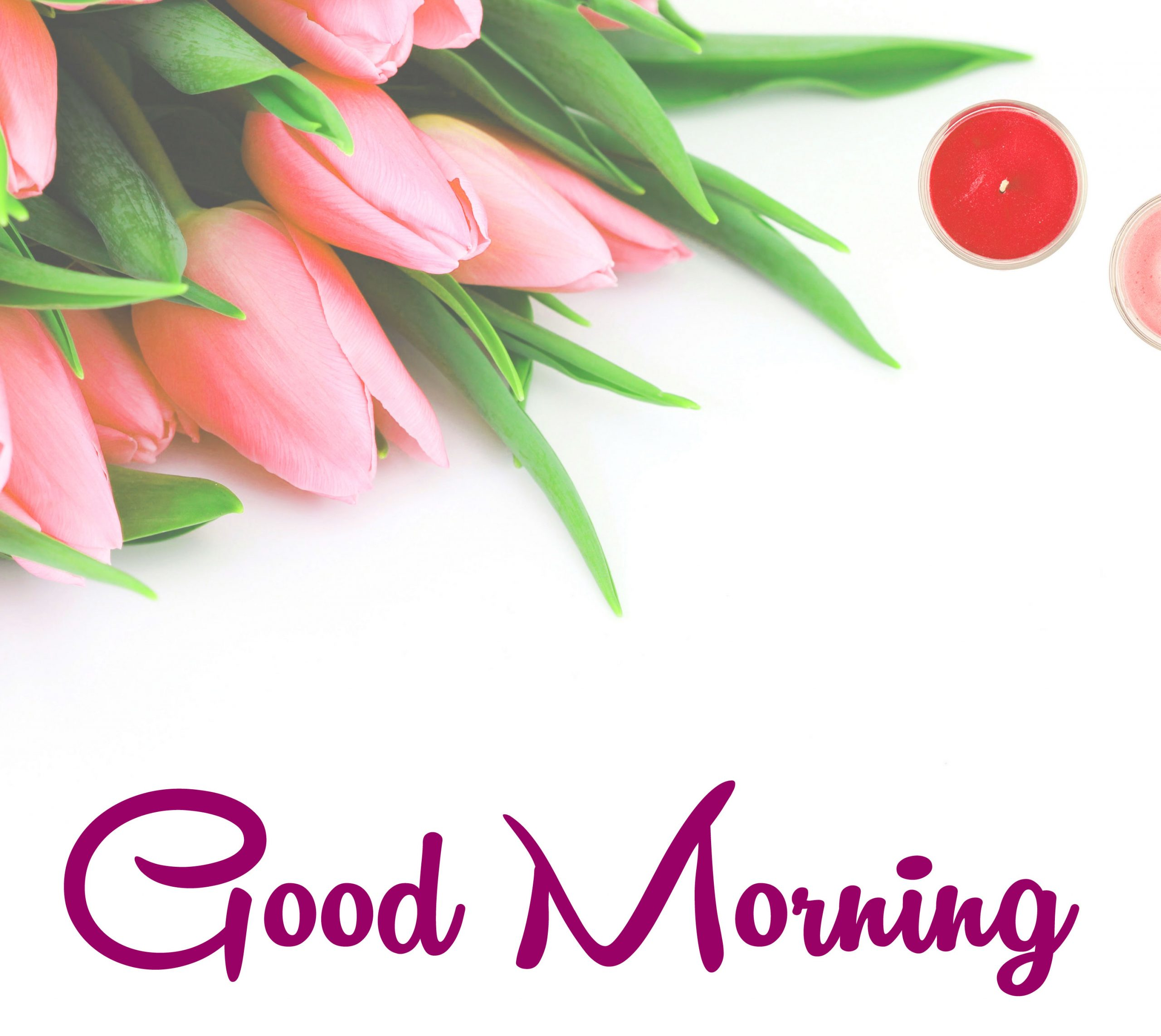 188+ Good Morning flowers and nature images and wallpaper (Latest images)