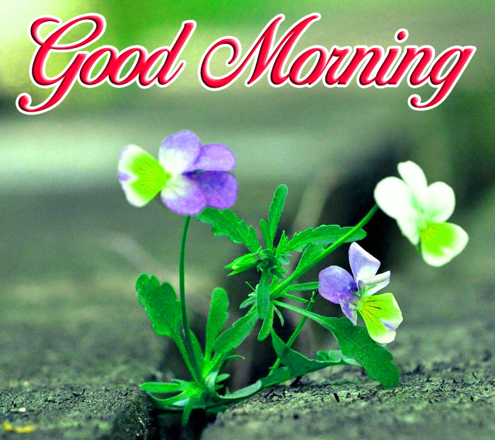 plant colorful flower Good Morning hd