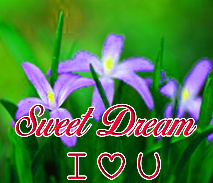 purple flower Sweet Dream I Love You images