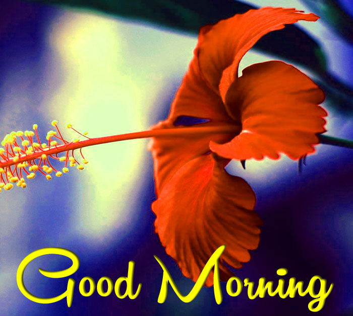 red flower Good Morning picture hd