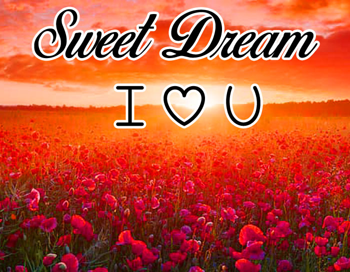 red flower field Sweet Dream I Love You images