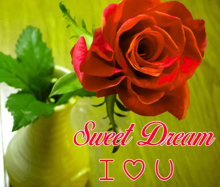 red rose Sweet Dream I Love You hd picture