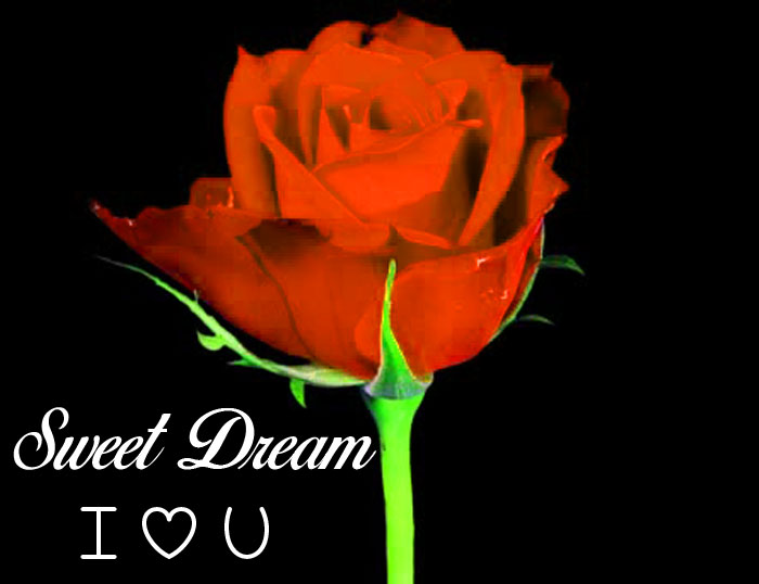 red rose Sweet Dream I Love You images