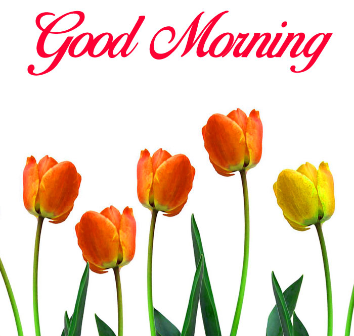 row flower Good Morning images gd