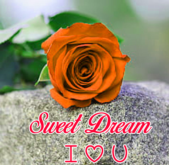 single red rose flower Sweet Dream I Love You images