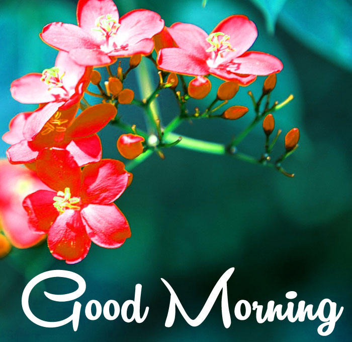 tropical flower Good Morning images