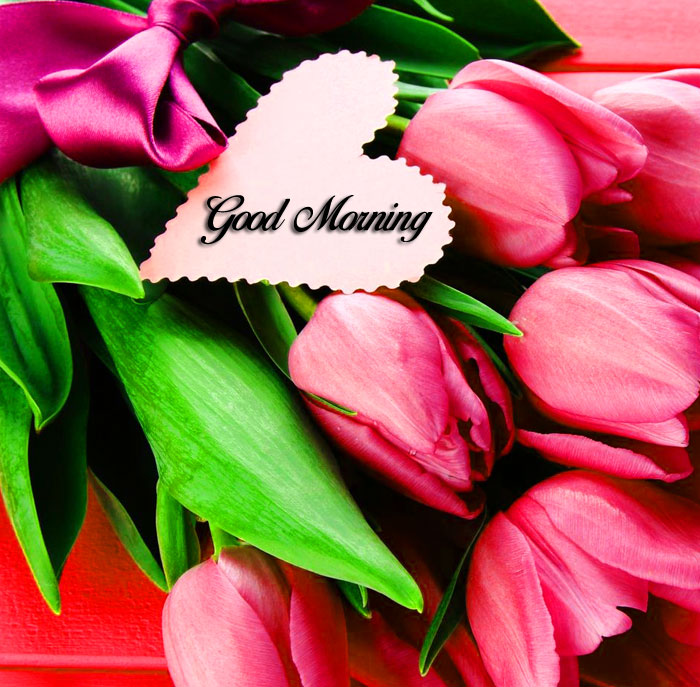 tulips flower and love Good Morning images