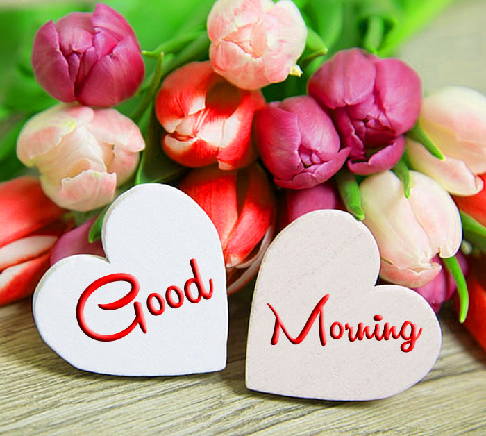 two love flower Good Morning pics hd