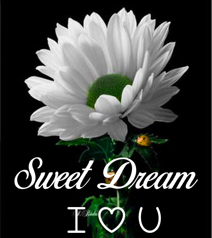 white lily flower Sweet Dream I Love You hd