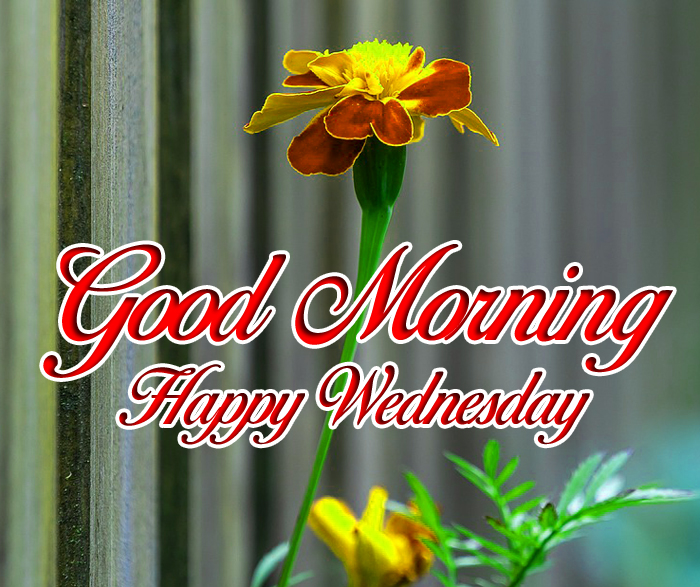 latest Good Morning Happy Wednesday flower images hd