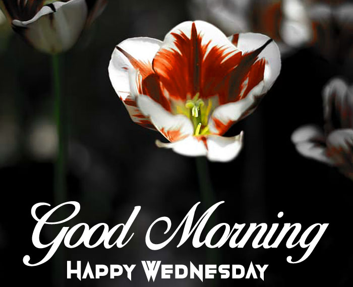 latest Good Morning Happy Wednesday love images hd