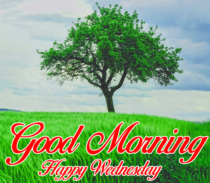latest tree Good Morning Happy Wednesday images hd