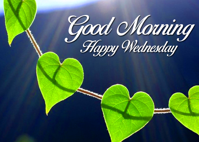 leaf Good Morning Happy Wednesday images hd