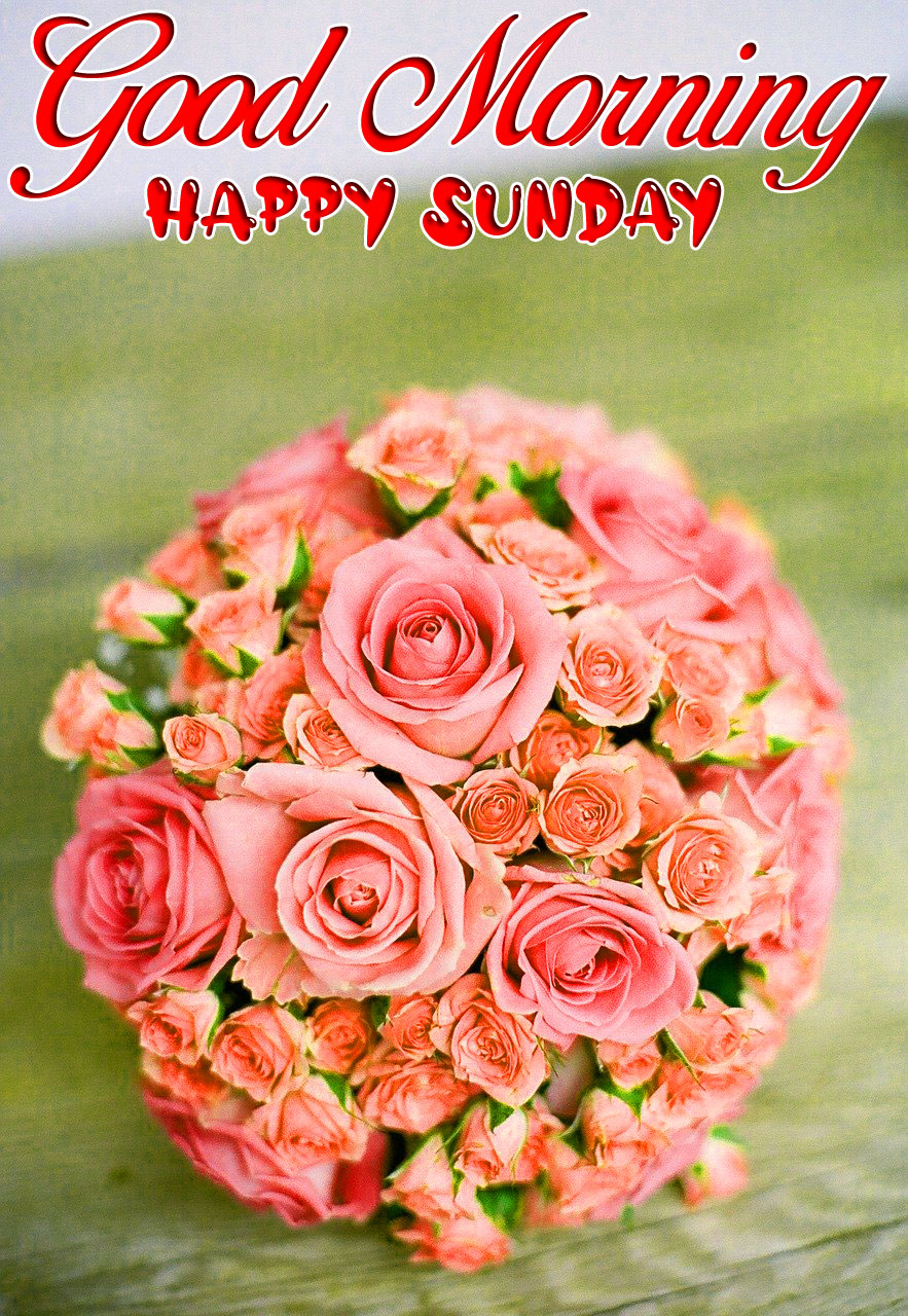 love flower Good Morning Happy Sunday images hd