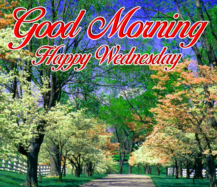 most beautiful Good Morning Happy Wednesday images hd