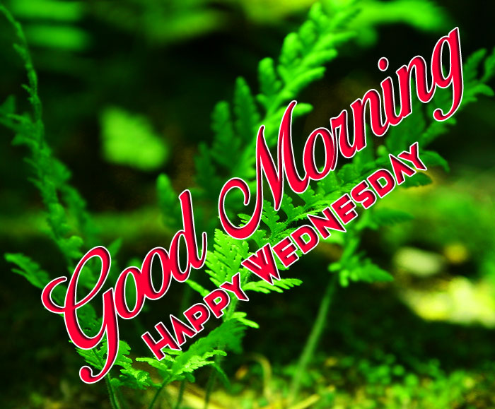 nature Good Morning Happy Wednesday wallpaper