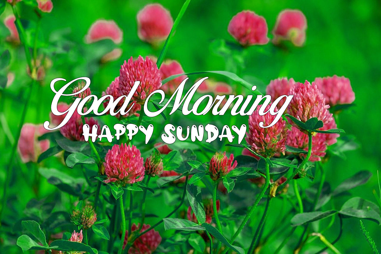 nature red flower Good Morning Happy Sunday images hd