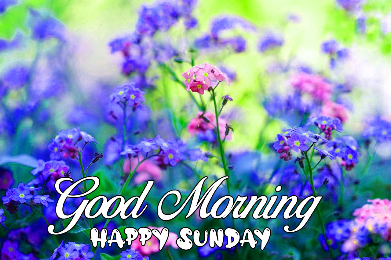 new blue flower Good Morning Happy Sunday images hd