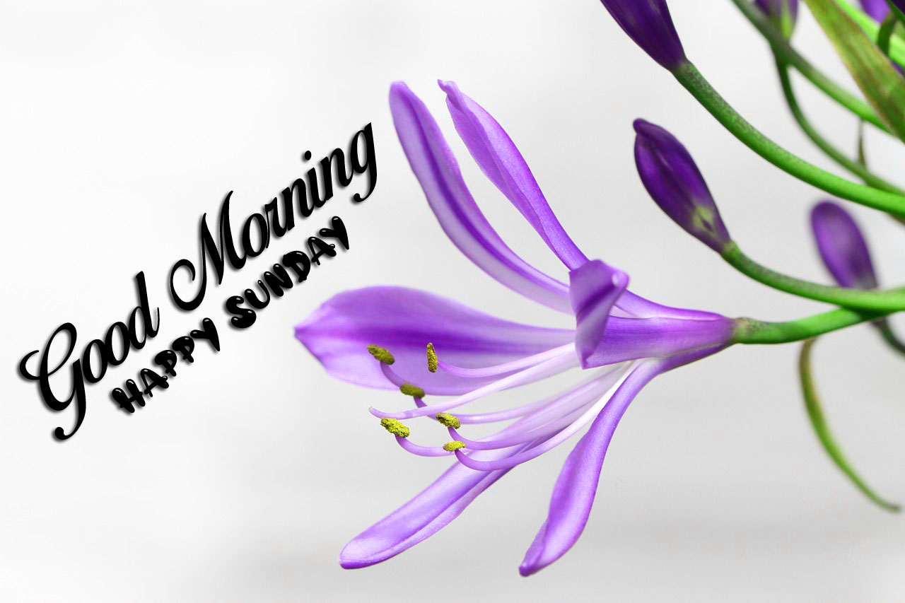 new flower Good Morning Happy Sunday images hd