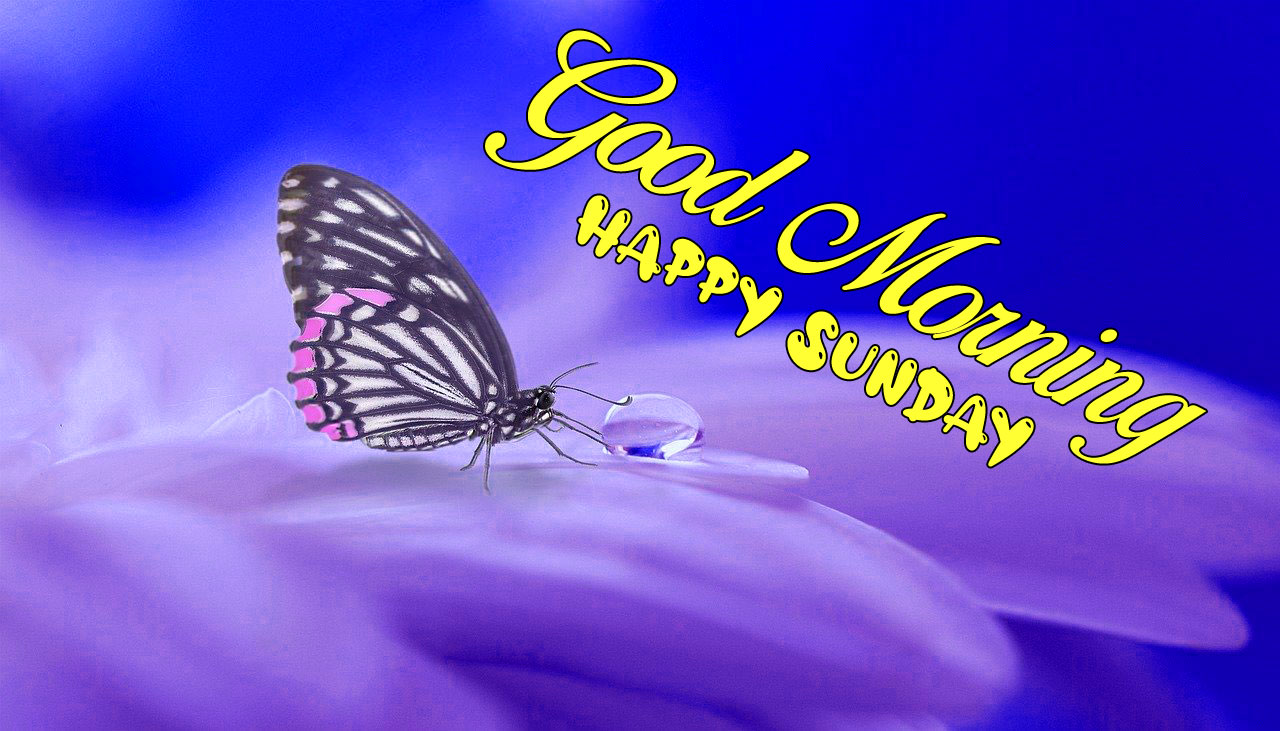 nice butterfly on the flower Good Morning Happy Sunday images