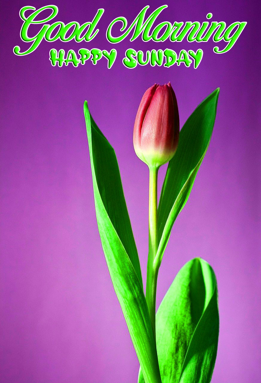 red flower green leaf Good Morning Happy Sunday images hd