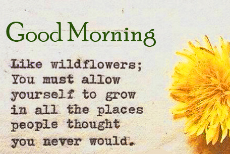 Beautiful Flower Quotes Good Morning Image