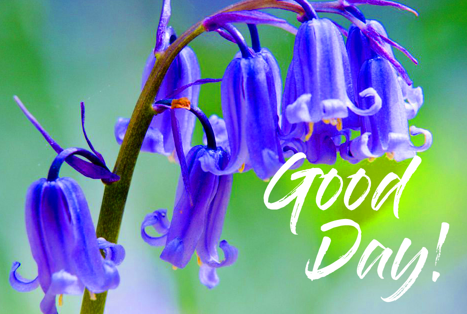 Blue Flowers with Good Day Wish