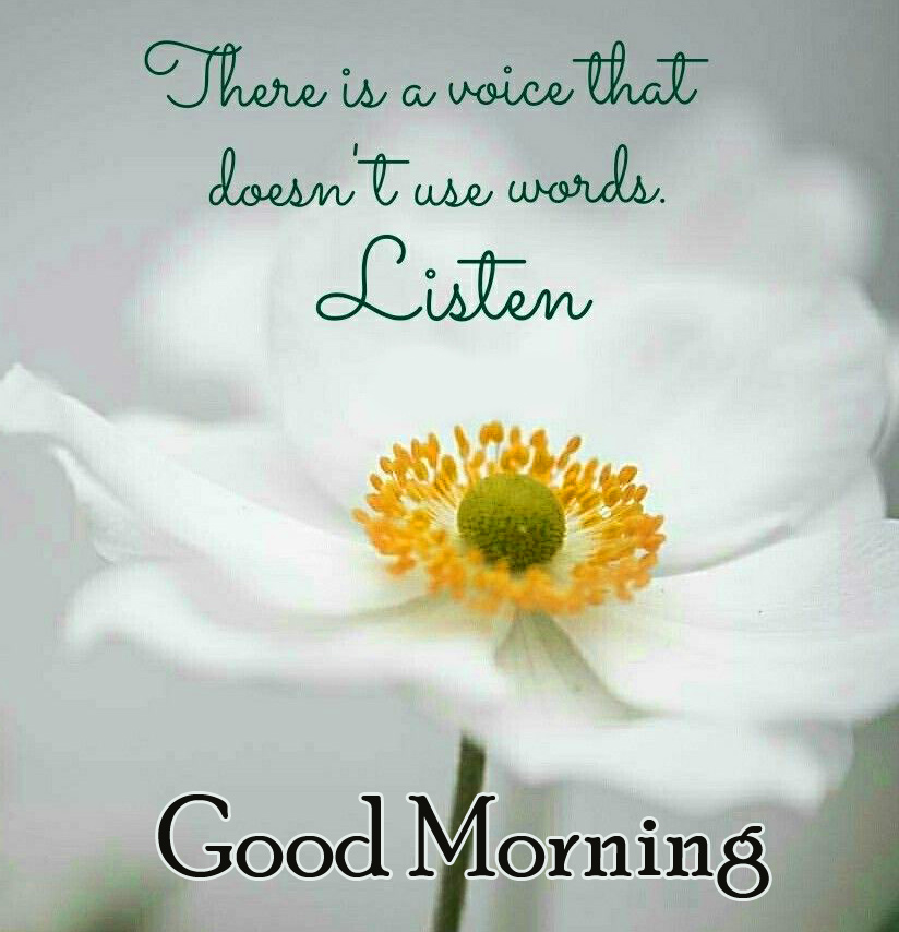 Flower with Good Morning Wish