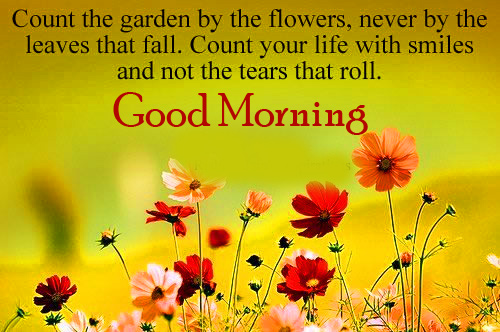 Flowers HD Quotes Good Morning Image