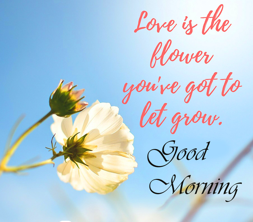 Flowers Quotes Good Morning Picture