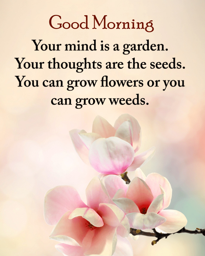 Flowers Quotes Good Morning Wallpaper