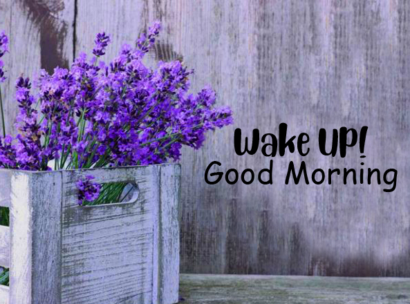 Flowers Wake Up Good Morning Pic HD