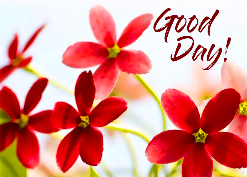 Good Day Red Flowers Greetings Pics