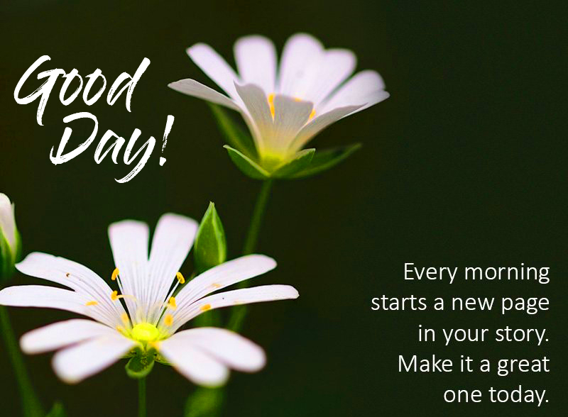 Good Day Wish with Flowers Message