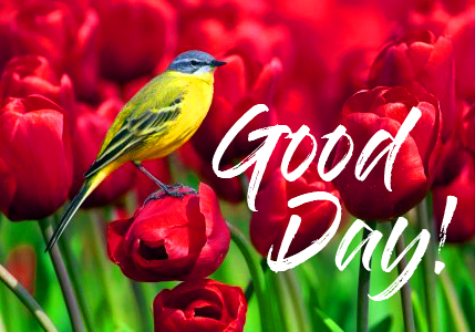Good Day with Red Tulips and Birds