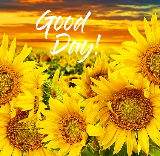 Good Day with Sunflower Garden Pic