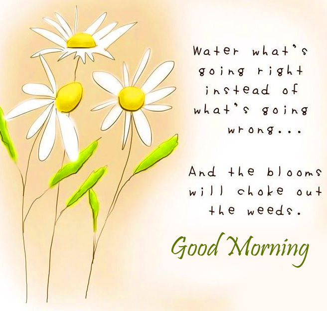 Good Morning Quotes Message Image