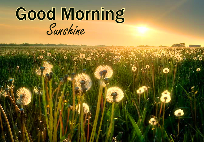 Good Morning Sunshine with Flowers in Sunshine
