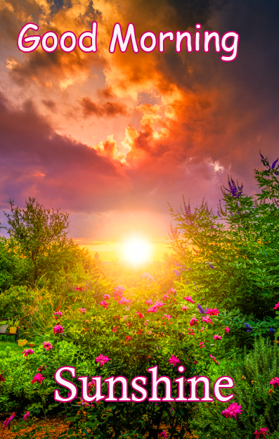 Lovely Nature Good Morning Sunshine Picture