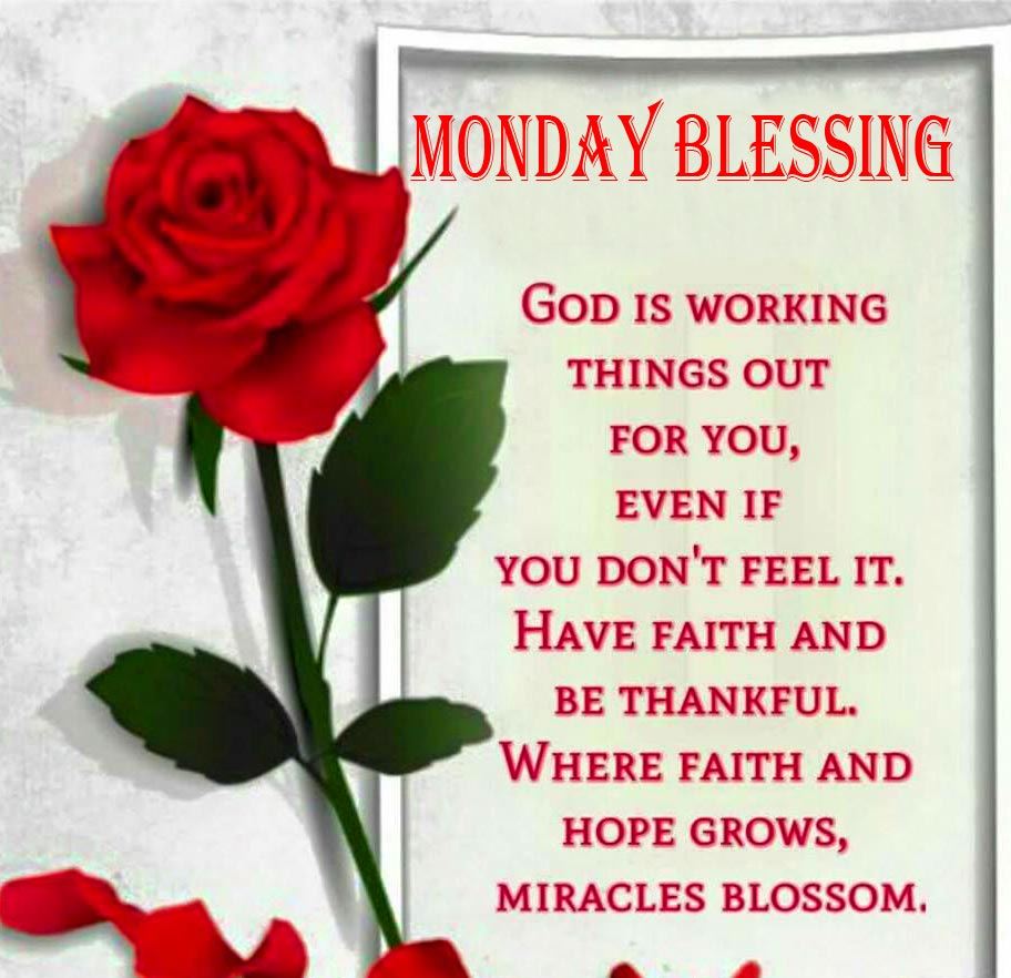 Red Rose Monday Blessing Wish Pic