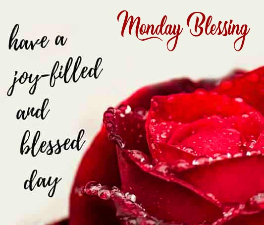 Red Rose with Dew Drops and Monday Blessing Wish