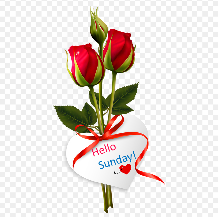 Red Roses Hello Sunday Image
