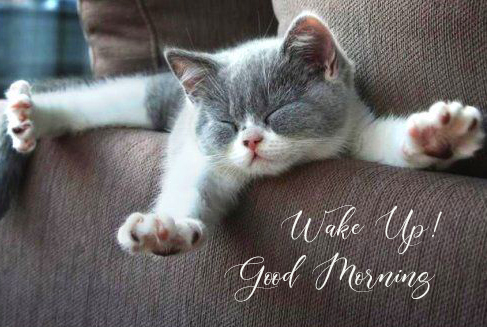 Stretching Cat with Wake Up Good Morning Wish