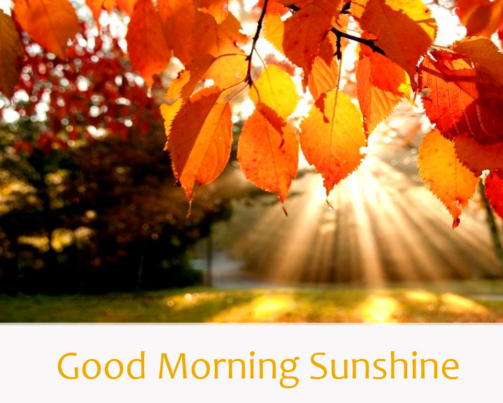 Sun Ray with Leaves Good Morning Sunshine Image