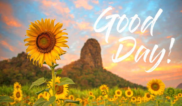 Sunflower with Good Day Wish