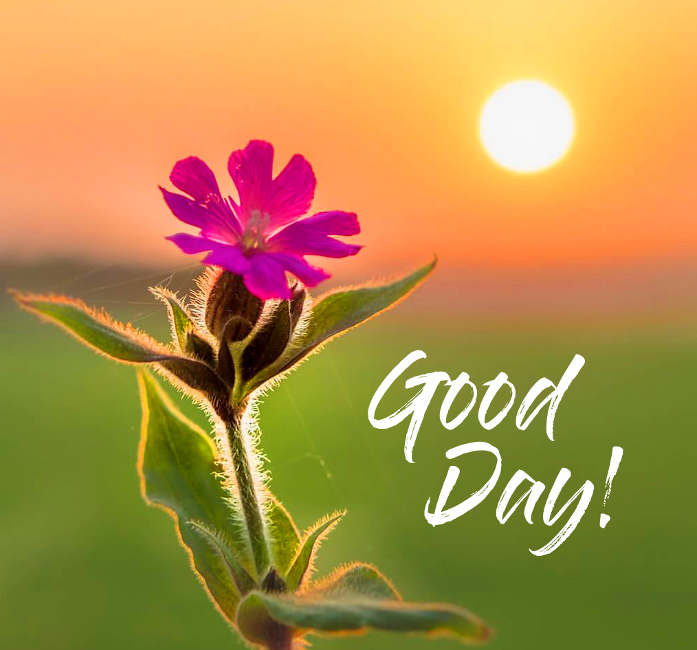 Sunrise Flowers with Good Day Wish