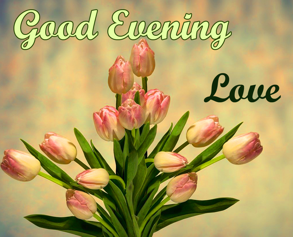 Tulips Good Evening Love Picture