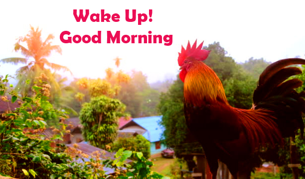 Wake Up Good Morning Wish with Cock